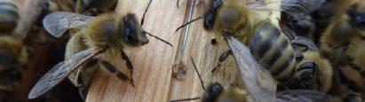 Wiosna wpasiece – sprawdzamy kondycję pszczół pozimie